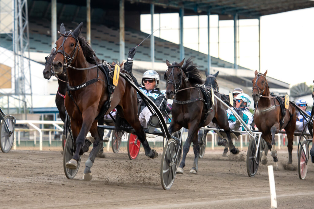 TR Bild. Bild för fri publicering t.o.m. 2020-09-13. Foto: Mikael Rosenquist Michelsens Bil Svenskt Travderby 202