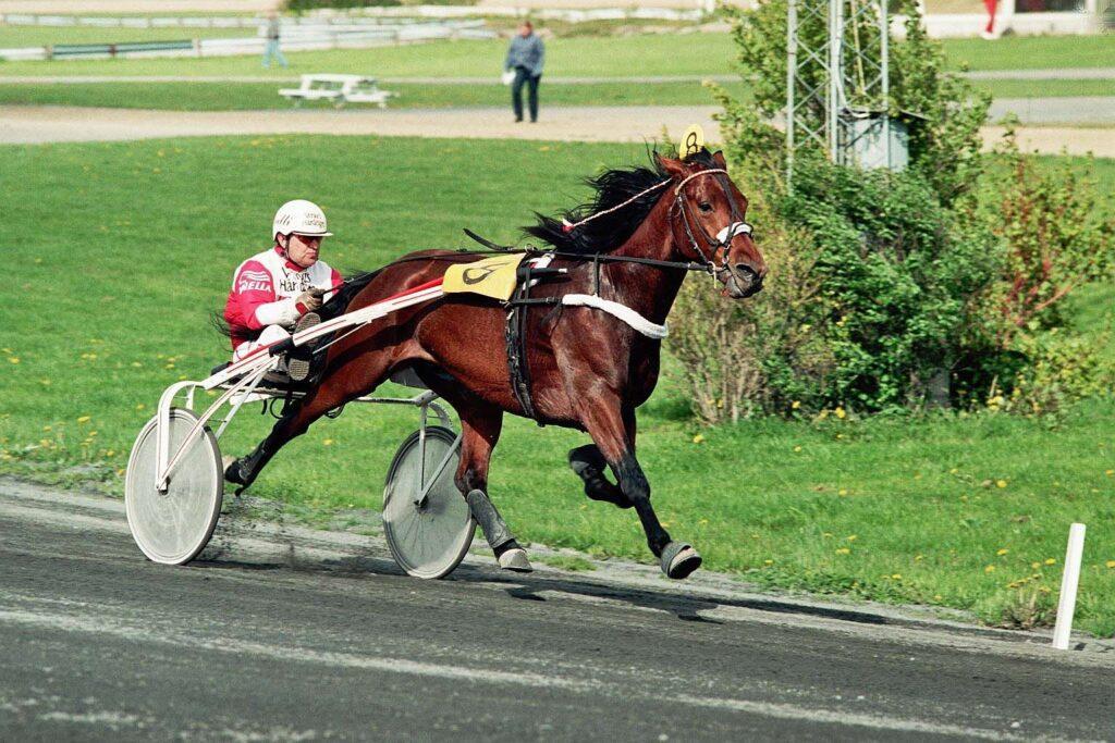Gentle Star - GUnnleif Tollefsen - Sørlandet 1996 (2)